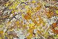 Lichen Pattern (6843277230).jpg
