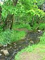 Loadpit Beck by the River Aire - geograph.org.uk - 1339989.jpg