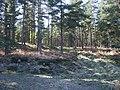 Looking towards summit (218m asl) of Craigmore Wood - geograph.org.uk - 418599.jpg