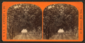 Lover's walk on grounds ofn Dr. Ball, from Robert N. Dennis collection of stereoscopic views.png