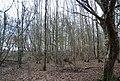 Lower Hucksteep Wood - geograph.org.uk - 1726928.jpg