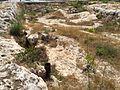 Mġarr cart ruts 17.jpg