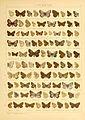 Macrolepidoptera01seitz 0165.jpg
