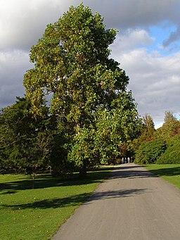 Main Drive, Exbury Gardens - geograph.org.uk - 1011777