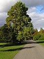 Main Drive, Exbury Gardens - geograph.org.uk - 1011777.jpg