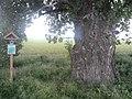 Majcichov, Slovakia - panoramio (5).jpg