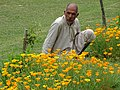 Man with Flowers - Nishat Bagh Garden - Srinagar - Jammu & Kashmir - India (26842899555).jpg