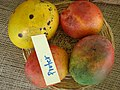 Mango Pruter Asit fs8.jpg