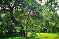 Manor park in Stayki.jpg