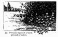 Manual of Gardening fig022.png