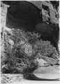 Map of Utah along Narrows Trail showing rocks that fell out. Ferns and hanging gardens inside arch. - NARA - 520469.tif