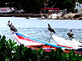 Margarita Pelicans and Boats.JPG