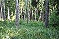 Mežs, Džūkstes pagasts, Tukuma novads, Latvia - panoramio.jpg