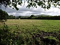Meadow by the Erme-Plym Trail - geograph.org.uk - 1411300.jpg