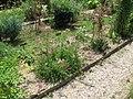 Medieval garden (Perugia) 15.jpg