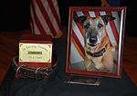 Memorial service held for military working dog at Fairchild 120105-F-XX000-300.jpg