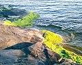 Merilevä kalliot Kaivopuisto 02.jpg