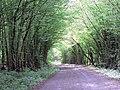 Methersham Lane - geograph.org.uk - 454489.jpg