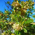 Miami Beach - Sand Dunes Flora - Green Plants and Bushes 04.jpg