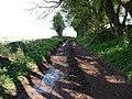 Mid Devon , Muddy Track - geograph.org.uk - 1253408.jpg