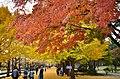 Midoricho, Tachikawa, Tokyo 190-0014, Japan - panoramio.jpg