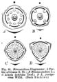 Mimosoideae diagrams Taub46.png