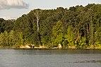Mixed Forests around Alum Creek Lake 2.jpg