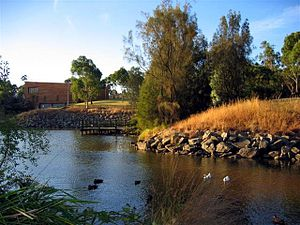 Monash University - One of the lakes at the university's main campus, Clayton