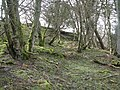 Mossy woodland above the River East Allen near The Holms - geograph.org.uk - 1800762.jpg