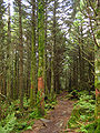 Mount Rogers - Spruce-Fir Forest.jpg