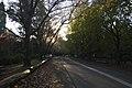 Mount Wilson NSW 2786, Australia - panoramio (13).jpg