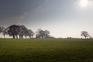 Hither Green - Mountsfield Park in January