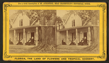 A stereoscope card showing a cottage with five people sitting on the porch and an enormous oak tree growing on the right; the tree is so large it appears to be growing through the roof and the drainpipe wraps around it