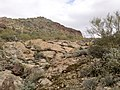 Mt. Pinter Base Loop, Tonto National Forest, Butcher Jones Trail, Fort McDowell, AZ 85264, USA - panoramio (107).jpg