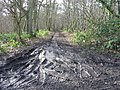 Muddy track in Gorsley Wood. - geograph.org.uk - 323542.jpg