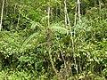 N.fusca crocker range habitat.jpg
