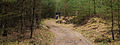 Nationaal Park Drents-Friese Wold. Locatie Dieverzand 02.jpg