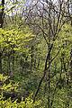 Nationalpark Hainich-Baumkronenpfad-by-Leila-Paul-IMG 3990 03.JPG