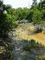 Natural Beauty of Sundarbans.jpg