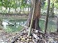Natural pond.jpg
