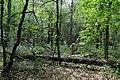 Naturschutzgebiet Heiliges Meer Heupen 13.jpg
