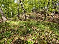Naturschutzgebiet NSG Nr. 158 Greifenstein (Gebiet an der Burg Greifenstein) 5 Sublocation DE-TH WDPA ID 163316.jpg