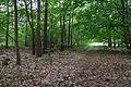 Naturschutzgebiet Rehburger Moor IMG 3203.jpg