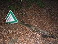 Naturwaldzelle.JPG
