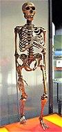 Neanderthalensis.jpg