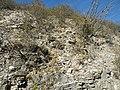 Near Agua fria, Queretaro (5757282123).jpg