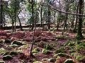 Nelder Wood - geograph.org.uk - 313663.jpg