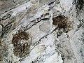 Nests on a Rock Ledge, Bempton Cliffs.jpg