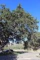 Neverland Ranch (14454982878).jpg
