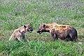 Ngorongoro 2012 05 30 2552 (7500989502).jpg